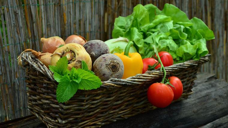 tecoal_consultoria_Nutricion-y-Dietetica_Asesoria-Nutricional-s